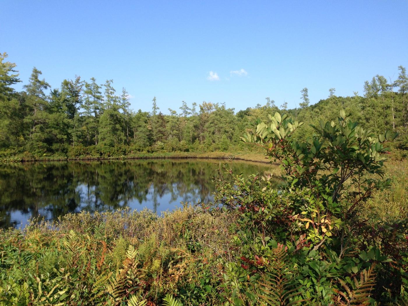 Triangle_Lake_Bog_State_Nature_Preserve